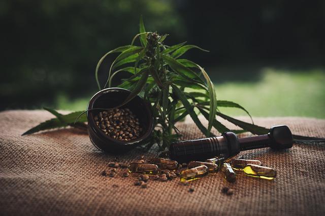 konopí – rostlina + olej + semena